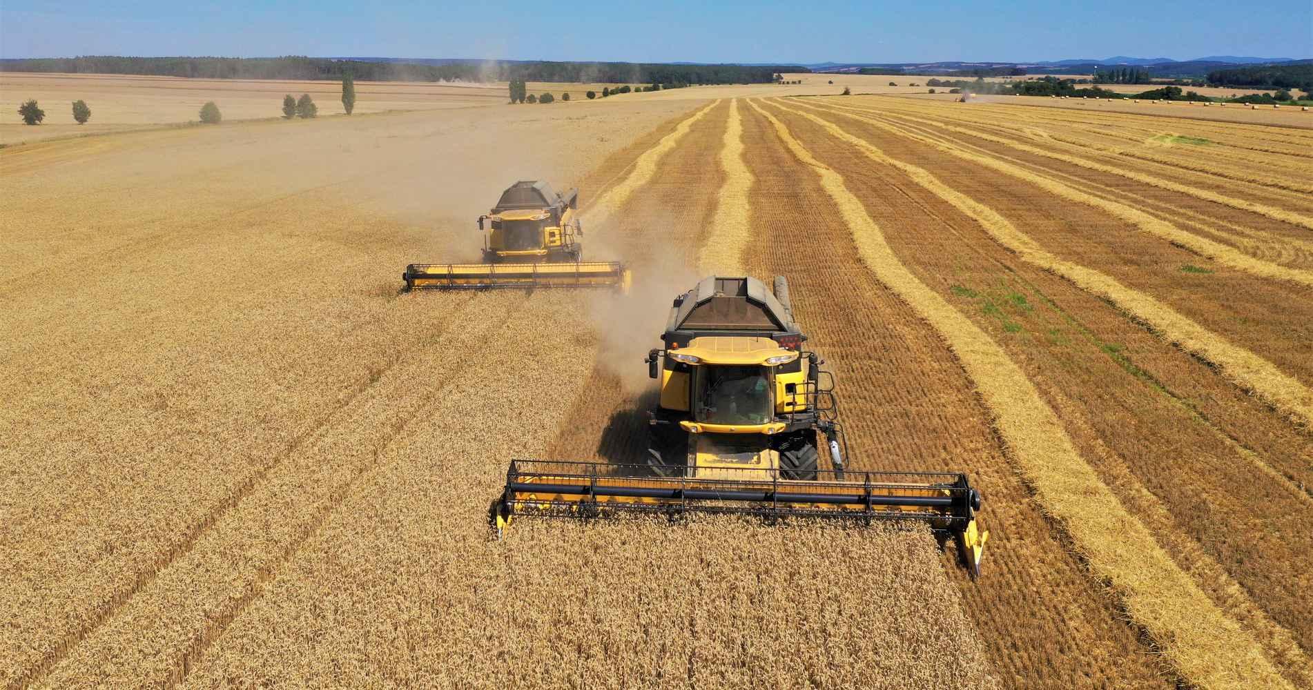 Pěstování obilí - pšenice, ječmen, řepka, kukuřice. jarní obiloviny, hořčice, hrách, aj.